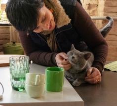 gato anuncio ultima affinity azul ruso barcelona russian blue novacat 04